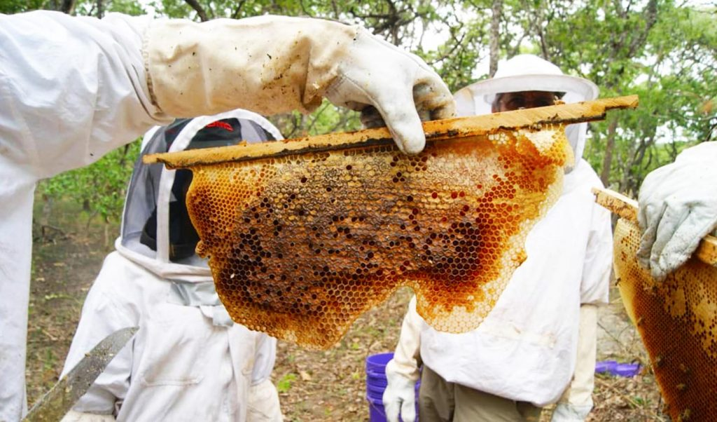 honeycomb, fresh honey, sustainable beekeeping, Pure Joy Honey, Tanzania